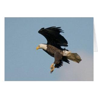 Bald Eagle in flight Card