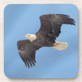 Bald Eagle in flight Beverage Coaster