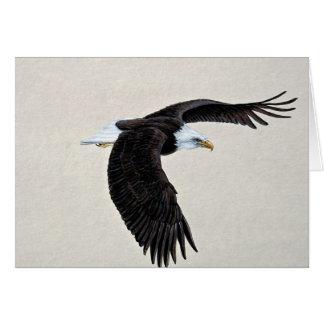 Bald eagle in flight greeting card
