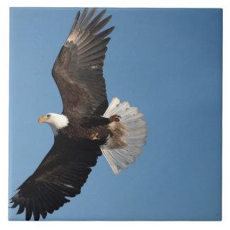 Bald Eagle in Flight, Haliaeetus leucocephalus, 2 Ceramic Tile