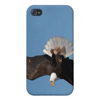 Bald Eagle in Flight, Haliaeetus leucocephalus, 2 iPhone 4/4S Case