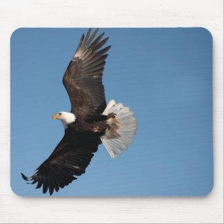 Bald Eagle in Flight, Haliaeetus leucocephalus, 2 Mouse Pad