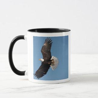 Bald Eagle in Flight, Haliaeetus leucocephalus, 2 Mug