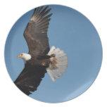Bald Eagle in Flight, Haliaeetus leucocephalus, 2 Party Plates