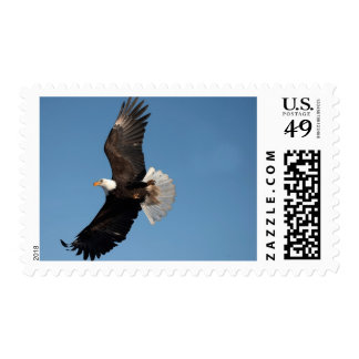 Bald Eagle in Flight Haliaeetus leucocephalus 2 Postage Stamps