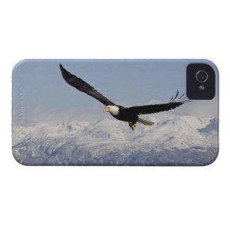 Bald Eagle in Flight, Haliaeetus leucocephalus, 3 iPhone 4 Case-Mate Case