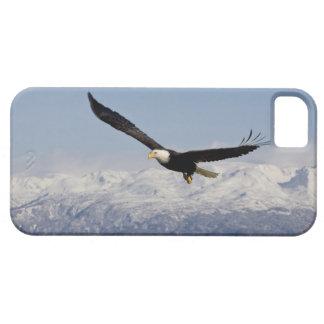 Bald Eagle in Flight, Haliaeetus leucocephalus, 3 iPhone SE/5/5s Case
