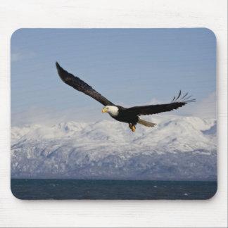 Bald Eagle in Flight, Haliaeetus leucocephalus, 3 Mouse Pad
