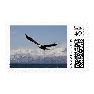 Bald Eagle in Flight Haliaeetus leucocephalus 3 Stamps