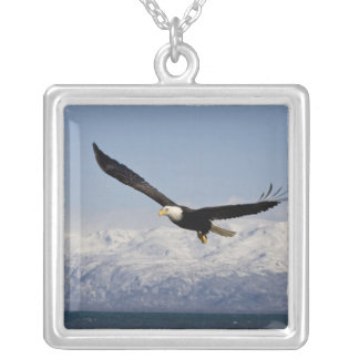 Bald Eagle in Flight, Haliaeetus leucocephalus, 3 Silver Plated Necklace