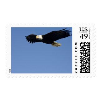 Bald Eagle in Flight Haliaeetus leucocephalus 4 Postage Stamp