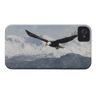 Bald Eagle in Flight, Haliaeetus leucocephalus, iPhone 4 Case