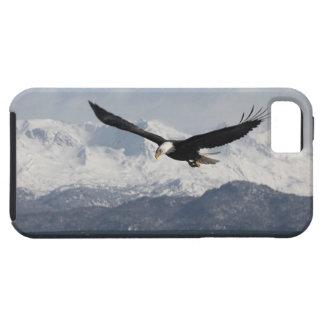 Bald Eagle in Flight, Haliaeetus leucocephalus, iPhone SE/5/5s Case