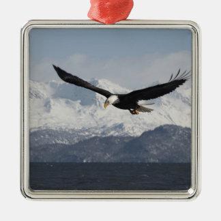 Bald Eagle in Flight, Haliaeetus leucocephalus, Metal Ornament