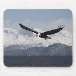 Bald Eagle in Flight, Haliaeetus leucocephalus, Mouse Pad