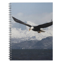 Bald Eagle in Flight, Haliaeetus leucocephalus, Notebook