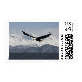 Bald Eagle in Flight Haliaeetus leucocephalus Stamps
