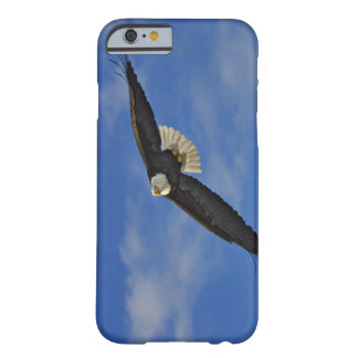 Bald Eagle in flight, Haliaetus leucocephalus, Barely There iPhone 6 Case