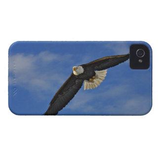 Bald Eagle in flight, Haliaetus leucocephalus, iPhone 4 Case-Mate Case