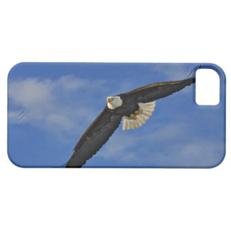 Bald Eagle in flight, Haliaetus leucocephalus, iPhone SE/5/5s Case