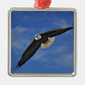 Bald Eagle in flight, Haliaetus leucocephalus, Metal Ornament