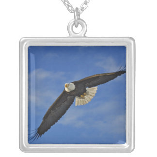 Bald Eagle in flight, Haliaetus leucocephalus, Silver Plated Necklace