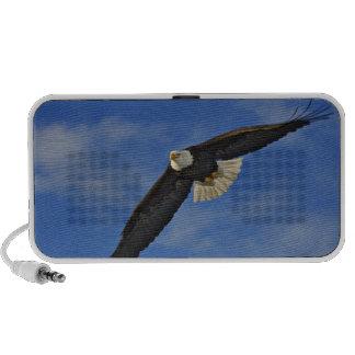 Bald Eagle in flight, Haliaetus leucocephalus, Laptop Speakers