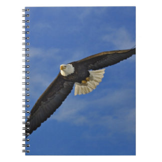 Bald Eagle in flight, Haliaetus leucocephalus, Spiral Notebook