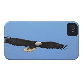 Bald Eagle in flight, Homer, Alaska, Haliaetus iPhone 4 Case-Mate Case
