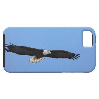 Bald Eagle in flight, Homer, Alaska, Haliaetus iPhone SE/5/5s Case