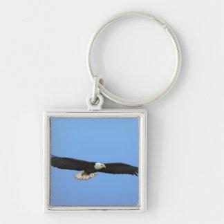 Bald Eagle in flight, Homer, Alaska, Haliaetus Keychain
