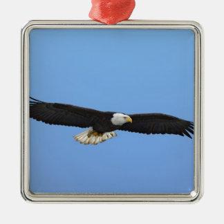 Bald Eagle in flight, Homer, Alaska, Haliaetus Metal Ornament