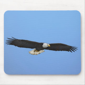 Bald Eagle in flight, Homer, Alaska, Haliaetus Mouse Pad