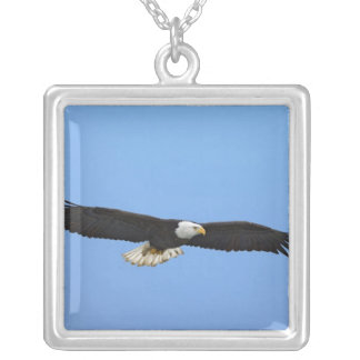 Bald Eagle in flight, Homer, Alaska, Haliaetus Silver Plated Necklace