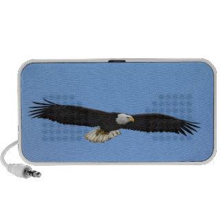 Bald Eagle in flight, Homer, Alaska, Haliaetus Travelling Speaker