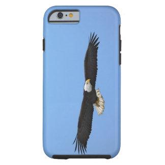 Bald Eagle in flight, Homer, Alaska, Haliaetus Tough iPhone 6 Case
