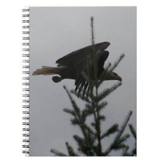 Bald Eagle in Flight Notebook