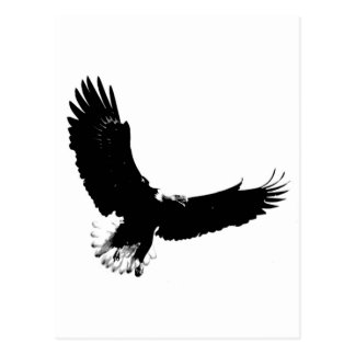 Bald Eagle in Flight Postcard