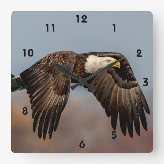 Bald Eagle in flight Square Wall Clock