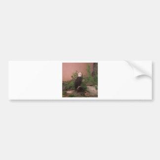 Bald Eagle in Paint Bumper Sticker