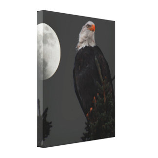 Bald Eagle in the moonlight Canvas
