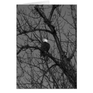 Bald Eagle in Tree Card