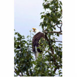 Bald Eagle in Tree Standing Photo Sculpture