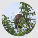 Bald Eagle in Tree Stickers