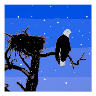 Bald Eagle in Winter Poster