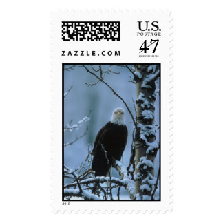 Bald Eagle in winter snow  Postage