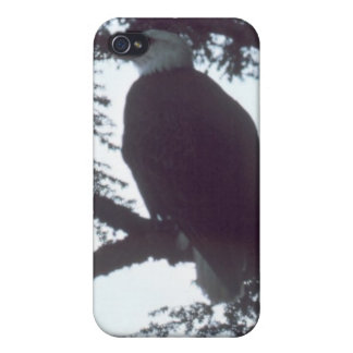 bald eagle iPhone 4/4S cover