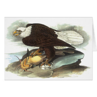 Bald Eagle, John Audubon Greeting Card