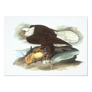 Bald Eagle, John Audubon Card