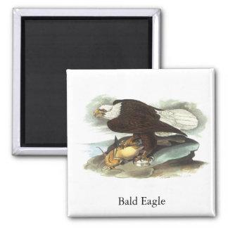 Bald Eagle, John Audubon Magnet